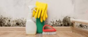 How To Prevent Mold Damage After A Storm
